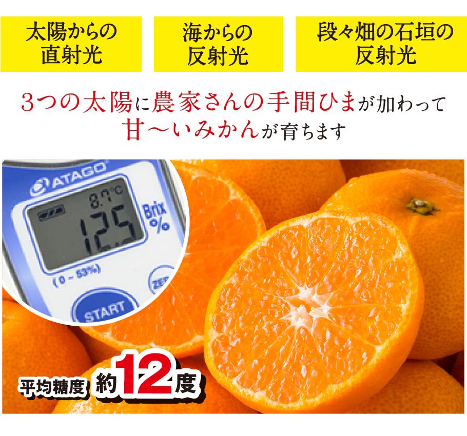 3つの太陽に農家さんの手間ひまが加わって甘〜いみかんが育ちます。平均糖度は約12度!