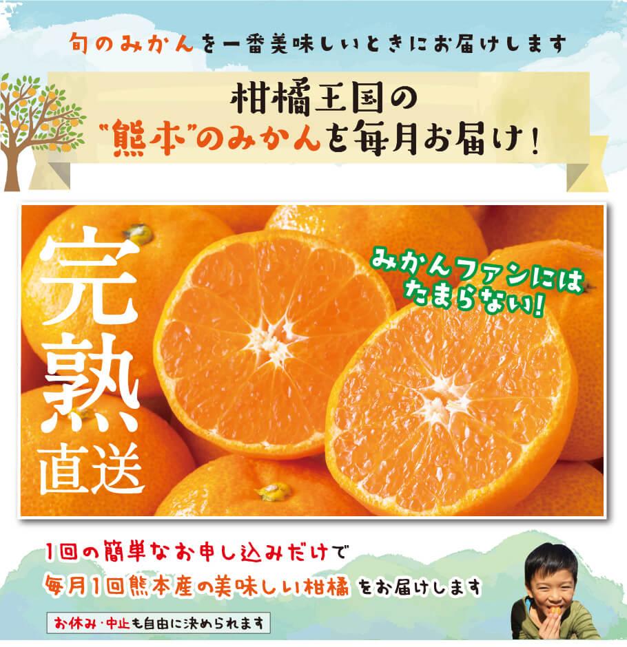 """旬のみかんを一番美味しい時にお届けします 柑橘王国の""""熊本""""のみかんを毎月お届け!完熟直送 1回の簡単なお申し込みだけで毎月1回隈本産の美味しい柑橘をお届けます。お休み・中止も自由に決められます"""