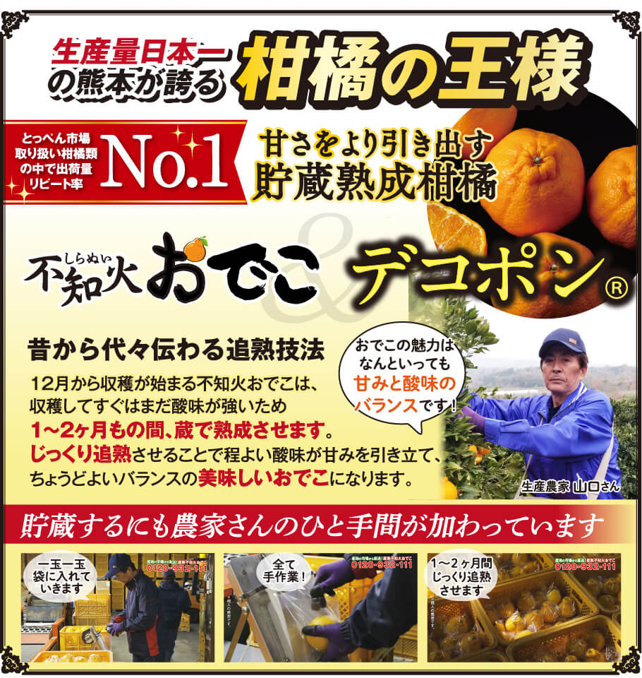 生産量日本一の熊本から誇る柑橘の王様 とっぺん市場取り扱い柑橘類の中で出荷量リード率No1 甘さをより引き出す貯蔵熟成柑橘 蔵熟不知火おでこ 昔から代々伝わるか熟技法 12月から収穫が始まる不知火おでこは、収穫してすぐはまだ酸味が強いため1~2ヶ月の間、蔵で熟成させます。じっくり追熟させることで程良い酸味が甘みを引き立て、ちょうどよいバランスの美味しいおでこになります。貯蔵するにも農家さんのひと手間が加わっています