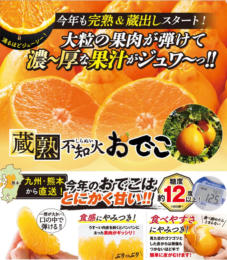 今年も完熟&蔵出しスタート!大粒の果肉が弾けて濃~厚な果汁がジュク~っ‼蔵熟不知火おでこ 九州・熊本から直送!今年のおでこはとにかく甘い!糖度約12度以上!