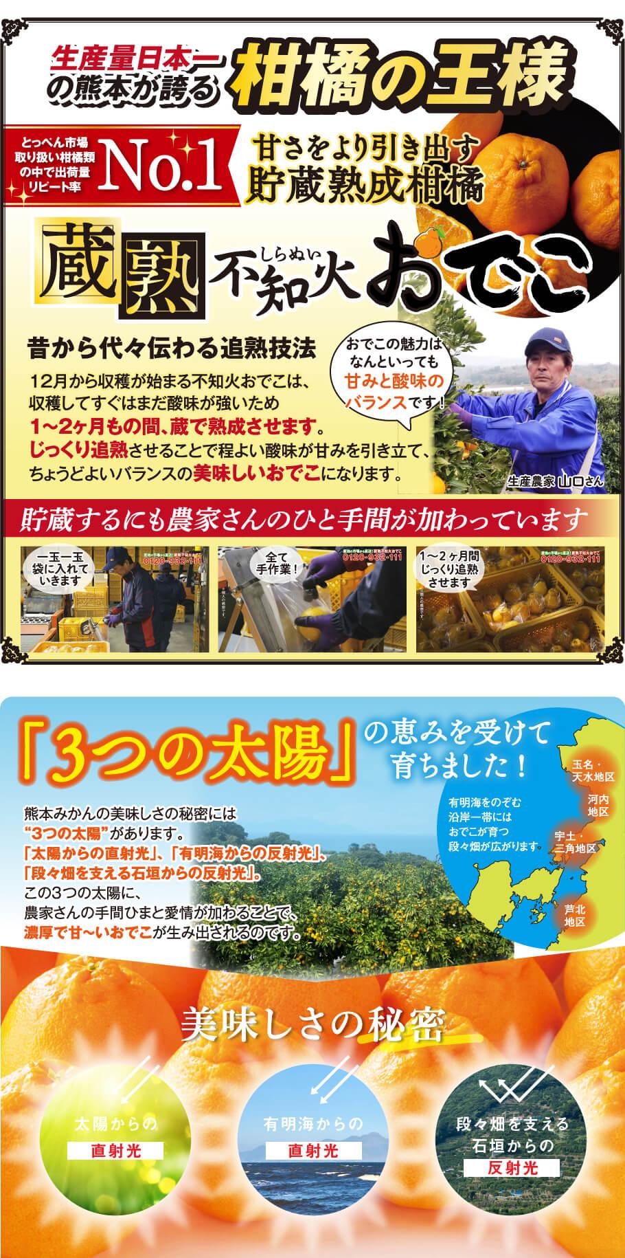 """生産量日本一の熊本から誇る柑橘の王様 とっぺん市場取り扱い柑橘類の中で出荷量リード率No1 甘さをより引き出す貯蔵熟成柑橘 蔵熟不知火おでこ 昔から代々伝わるか熟技法 12月から収穫が始まる不知火おでこは、収穫してすぐはまだ酸味が強いため1~2ヶ月の間、蔵で熟成させます。じっくり追熟させることで程良い酸味が甘みを引き立て、ちょうどよいバランスの美味しいおでこになります。貯蔵するにも農家さんのひと手間が加わっています。 「3つの太陽」の恵みを受けて育ちました!熊本みかんの美味しさの秘密には""""3つの太陽""""があります。「太陽からの直射光」、「有明梅からの反射光」、「段々畑を支える石垣からの反射光」。この3つの太陽に、農家さんの手間ひまと愛情が加わることで、濃厚で甘~いおでこが生み出されるのです。"""